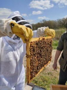 apiculteur et cadre avec abeilles